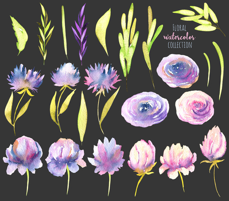 Watercolor pink and purple peony, roses, asters and greed branches collection, isolated elements set, hand painted on a dark background