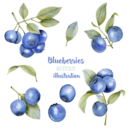 Watercolor blueberries illustration collection, hand painted isolated on a white background 写真素材
