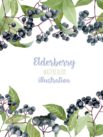 Card template with watercolor of elderberry branches, frame border background, hand painted on a white background