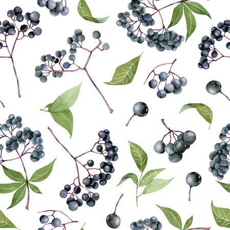 Watercolor elderberries seamless pattern, hand painted on a white background