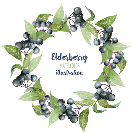Watercolor elderberry branches wreath, frame border, hand painted on a white background