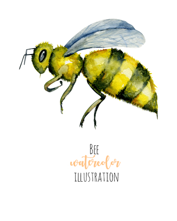 Watercolor bee illustration, hand painted isolated on a white background Stock Photo