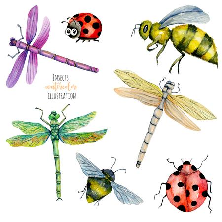 Illustrazione dell'acquerello colorato libellule, api e coccinelle, dipinto a mano isolato su uno sfondo bianco
