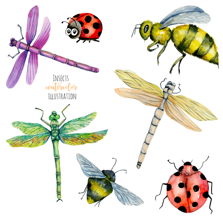 Watercolor colorful dragonflies, bees and ladybugs illustration, hand painted isolated on a white background