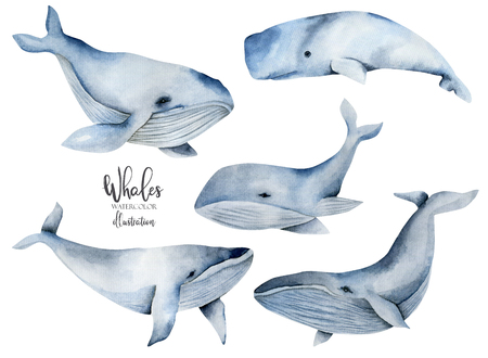 Watercolor whales illustration