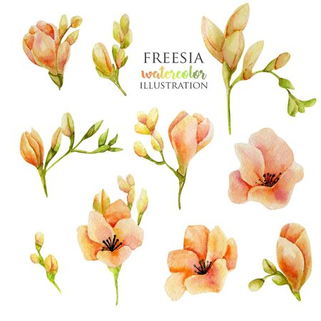 Watercolor pink freesia flowers set, hand drawn isolated on a white
