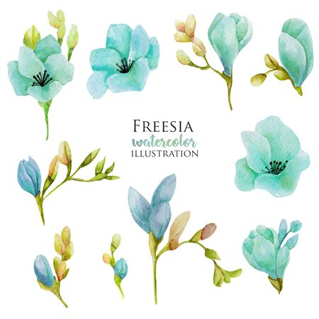 Watercolor blue freesia flowers set, hand drawn isolated on a white