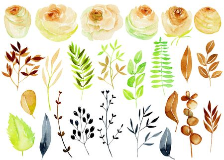 Watercolor tea roses, branches and leaves collection, isolated elements set, hand painted on a white background, diy elements