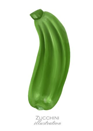 Green zucchini, hand drawn illustration, isolated on a white background Imagens