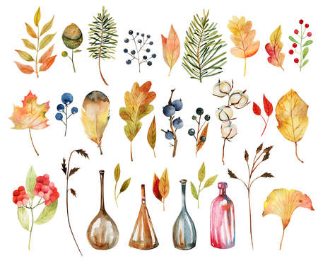 Set of watercolor autumn plants: leaves, cotton flowers, yellow tree leaves, fall berries, oak leaves and acorns, bottles; hand painted isolated illustrations on a white background