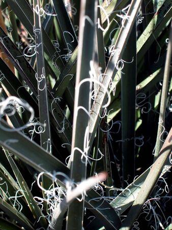 Plant With Fringe-Left