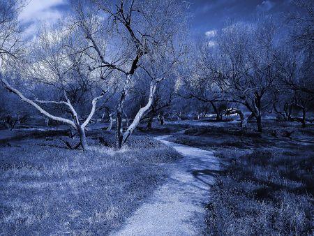 arboles secos: Blue d�o de tono la imagen de una pista de tierra que llevan a un oscuro bosque de �rboles muertos