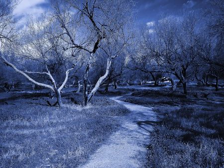 Blue duo-tone image of a dirt trail leading into a dark grove of dead trees 免版税图像