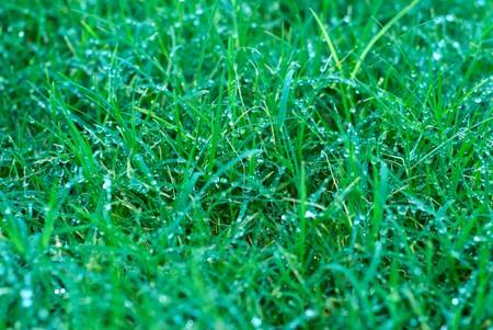 Wet Bermuda Grass