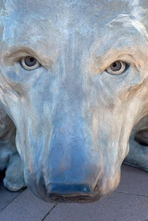 stare: Bears Intimidating Stare