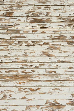 peeling paint: Old Wood with peeling antique white paint showing cracking, distress, knots and grain