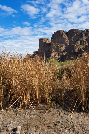 Tall, dry grass in front of green plants and desert mountains with blue sky and white clouds