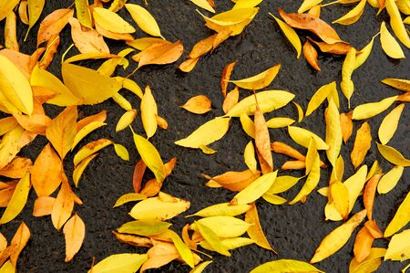 A background of yellow and golden leaves on wet asphalt