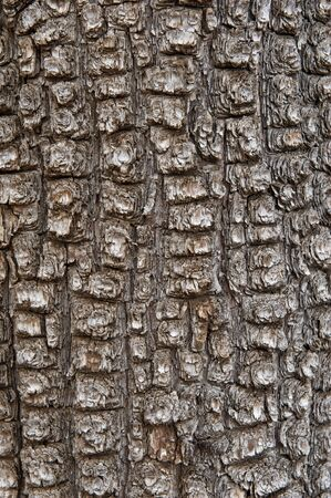 juniper tree: A background of very rough Aligator Juniper bark in a vertical orientation