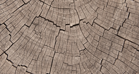 Crossection of weathered and worn tree rings