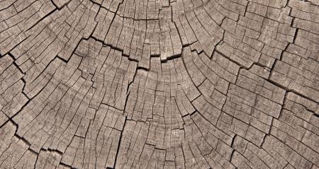 Crossection van verweerde en versleten boomringen