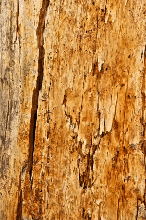 splintered: Tree trunk with many cracks and marks in it