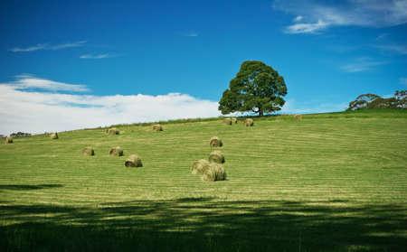 Tree on the summer field photo
