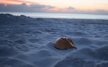 crab on the beach - Ft. Myers Beach