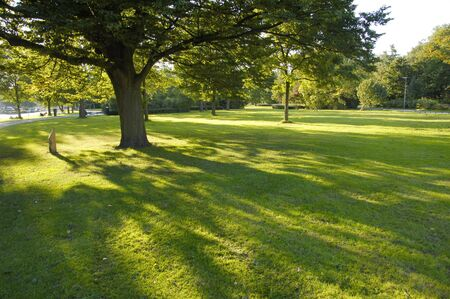 grass plot: The trees in the summer park Stock Photo