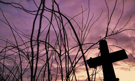 crist: The crist in sticks at sunset