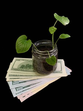 Jar with a green plant in dollars. A tree grows on American banknotes. Concept: financial investments, cash profit, investment growth.
