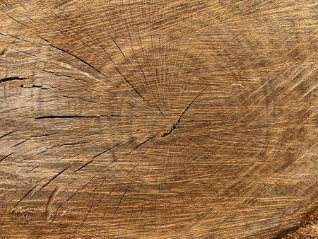 Old tree stump with cracks. Cross section of a tree trunk, tree structure, annual rings. Background texture: perennial oak.
