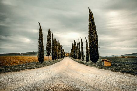 Mood fall photo of Tuscany landscape. A straight road among the tall trees. Empty space background for you products and decoration.