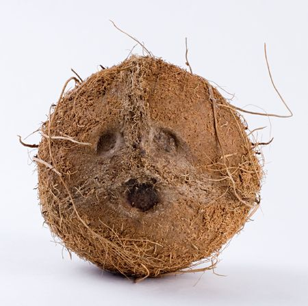 The upper side of a coconut with three pores. White background. Close-up.
