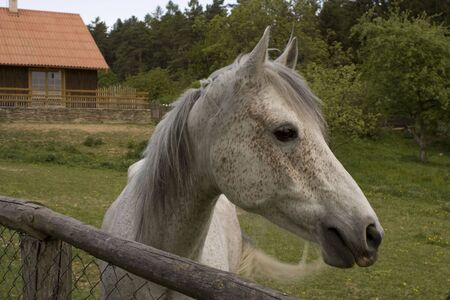 roan: Cottage and roan horse behind fence Stock Photo
