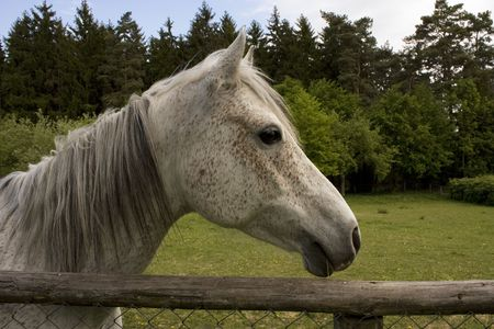 Roan horse at a fence Stock Photo