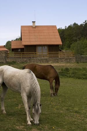 Roan and brown horses in front of cottage Stock Photo