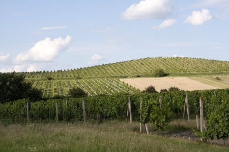 morava: Vineyards of Palava - moravian wine district