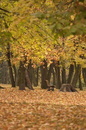 Bench in park full of leaves - autumn nature photo