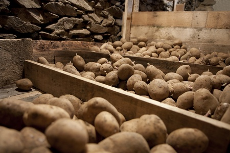 Vegetable cellar - potatoes stored in cold stock Stock Photo