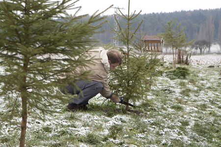 Man cutting a Christmas tree in nature Stock Photo - 8346108