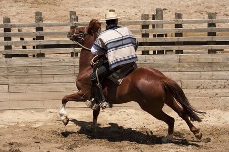 Chilean rodeo - traditional sport of horsemen Stock Photo