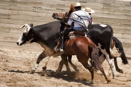 chilean: Chilean rodeo - traditional sport of horsemen Stock Photo