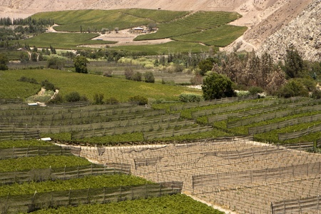 inhospitable: Elqui valley, Chile - fertile valley in inhospitable mountains