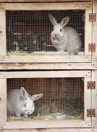 Breeding rabbits on a farm in small boxes Reklamní fotografie