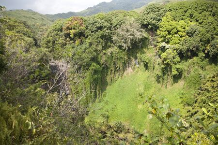 Rain forest in mountains on tropical island Reklamní fotografie