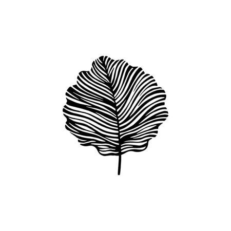 aspen leaf: Hand drawn aspen leaf. Eco icon.