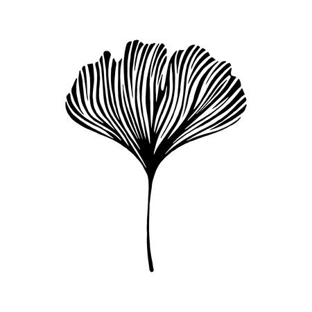 ginkgo: Hand drawn ginkgo leaf. Eco icon. Illustration