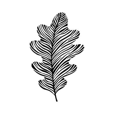 Hoja de roble dibujado a mano. Icono de Eco. Ilustración de vector