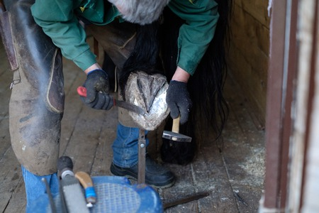Clearing the hooves of the horse with special tools. A blacksmith works with a horse.